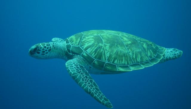 Sea Turtles In Miami Sequarium